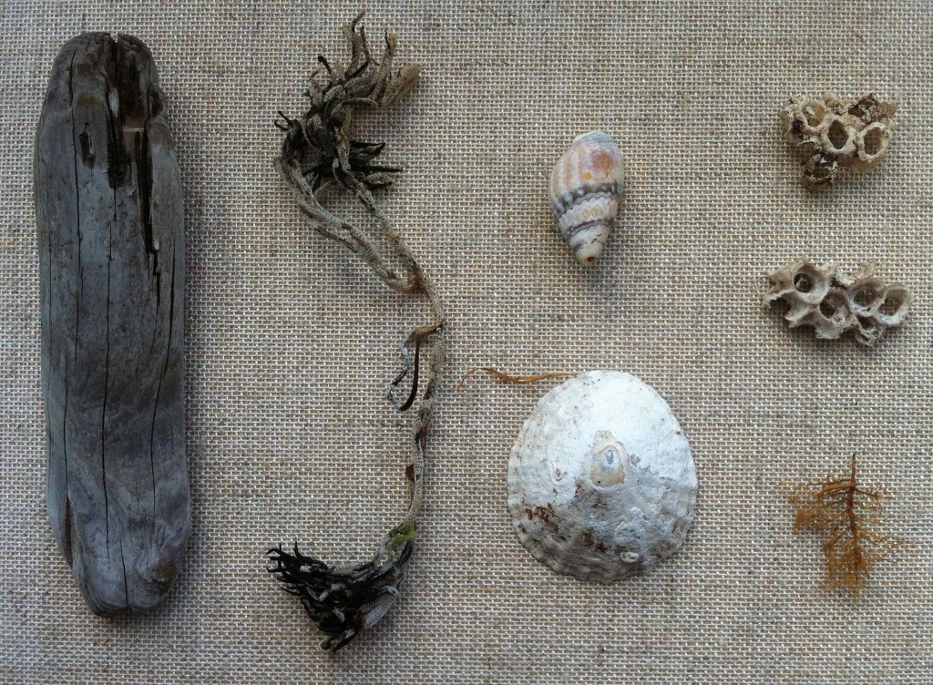 Alice Fox beachcombing