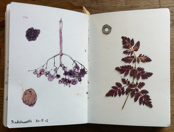 Alice Fox berries and leaf sketchbook page