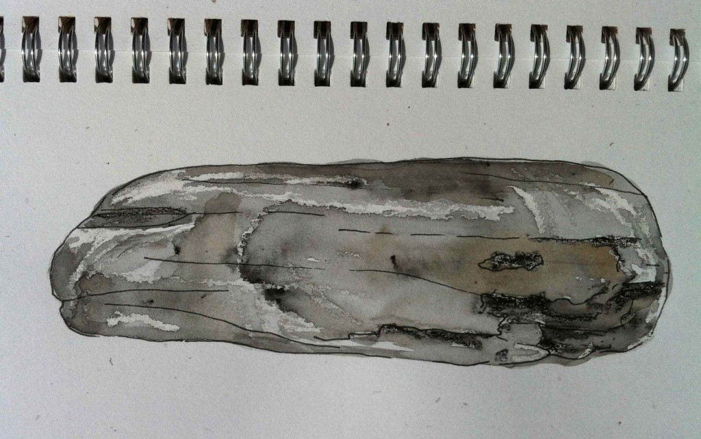 Alice Fox driftwood sketch