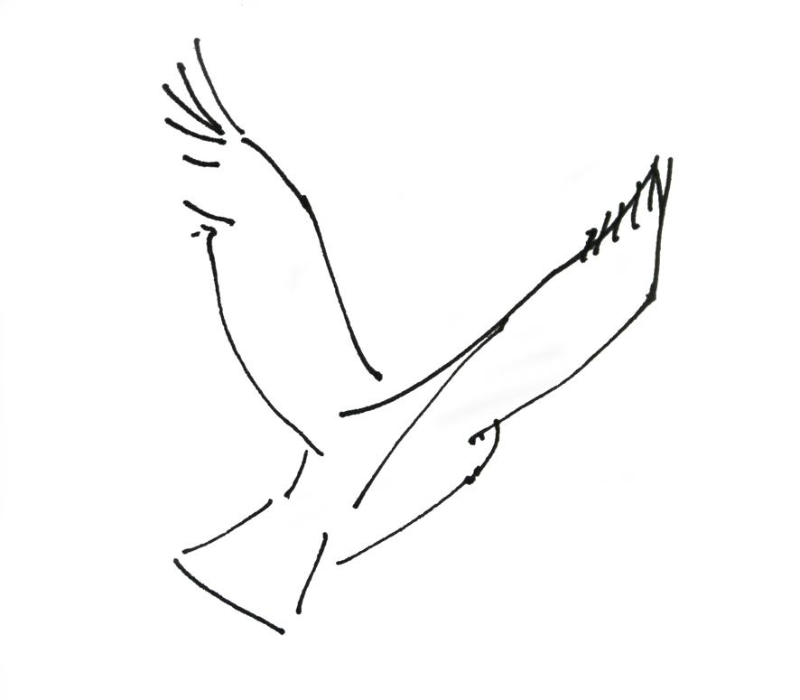 Alice Fox owl sketch