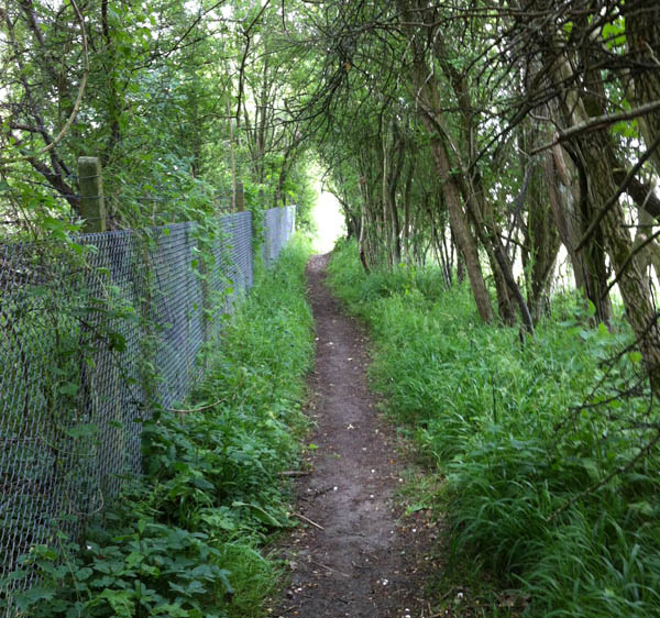 Alice Fox railway path
