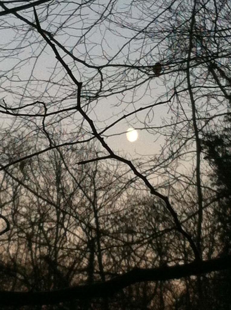 Alice_Fox_Hackfall_woods_moon