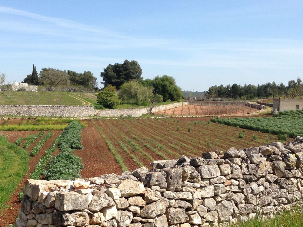 Alice_Fox_Puglia_agriculture