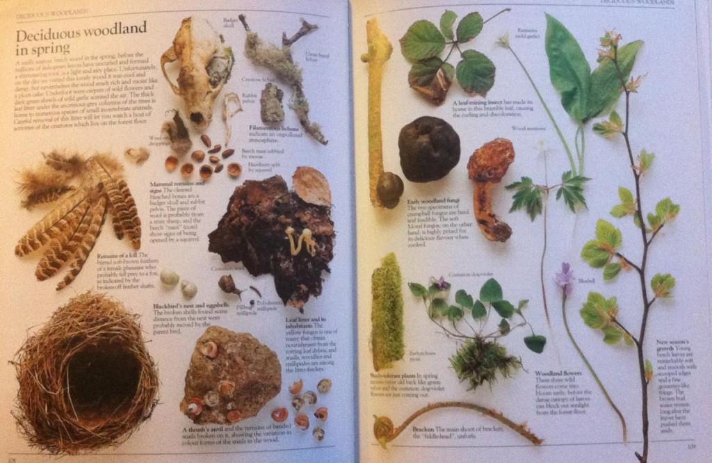 Amateur Naturalist deciduous woodland