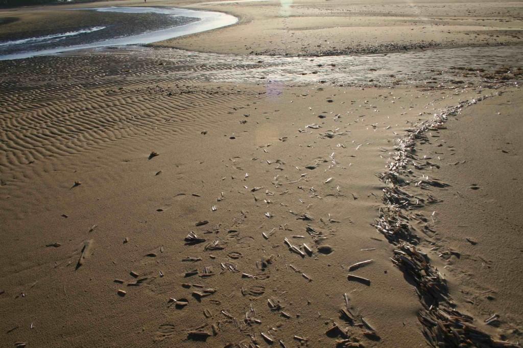 Holkham Bay razor shell tide line