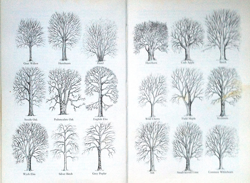 winter_tree_profiles